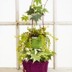 Botanical Bliss Hanging Baskets