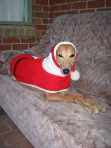 greyhound in sweater - Image credit Jan Brown