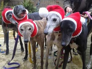 5 greyhounds - Image credit Jan Brown